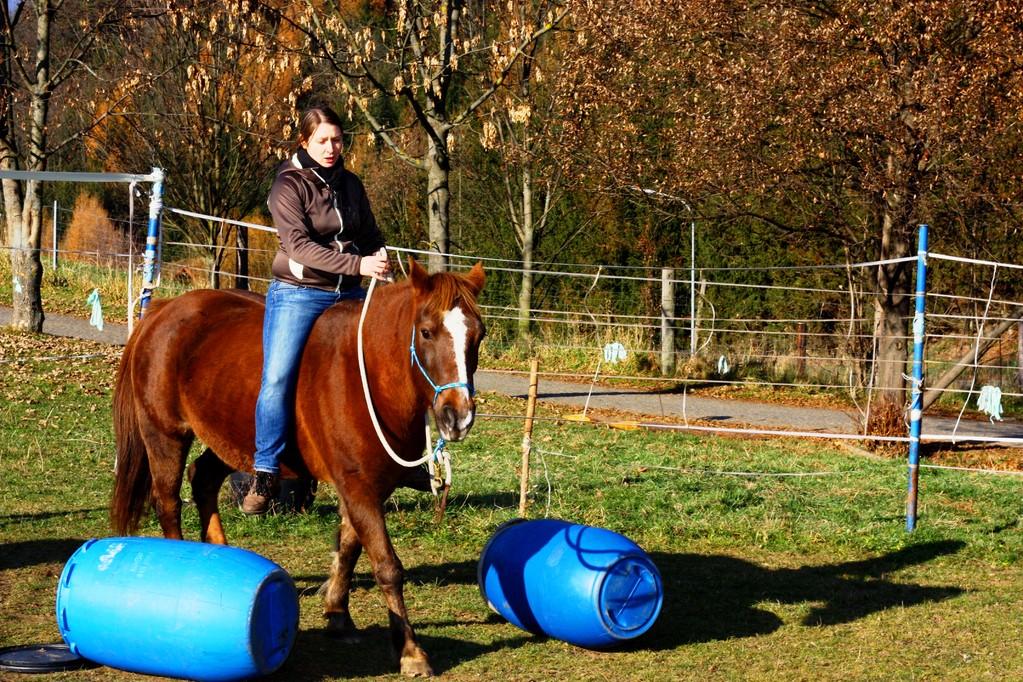 Natural Horsemanship Trainer