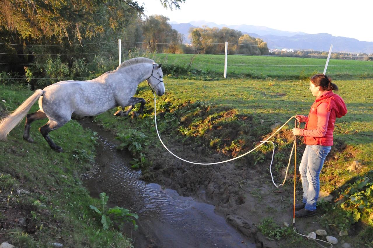TrickyHorse Wassertraining