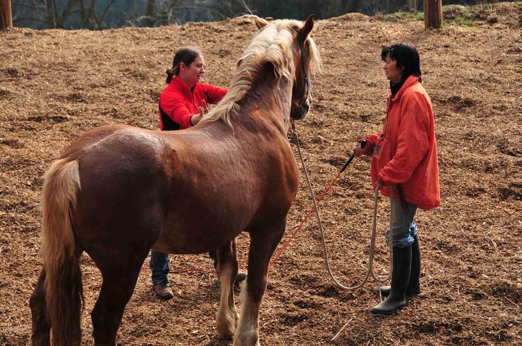 Natural Horsemanship Österreich
