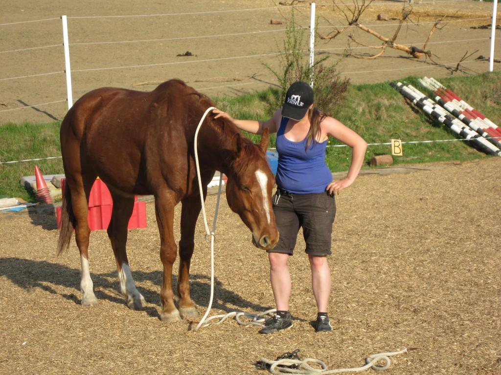 Horsemanship Training
