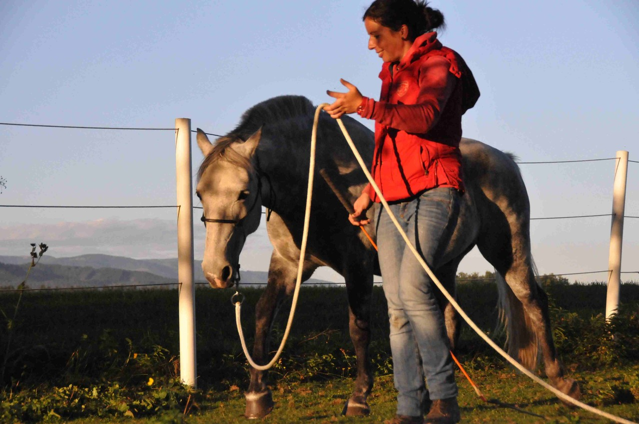 TrickyHorse Natural Horsemanship - Unterricht