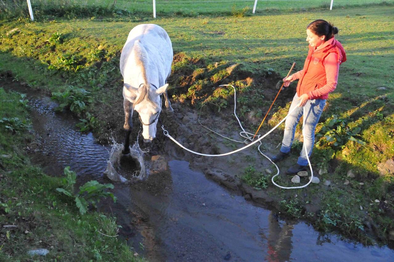 TrickyHorse Natural Horsemanship - Wassertraining