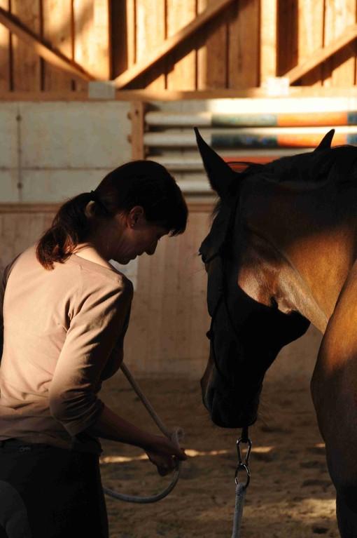 TrickyHorse Natural Horsemanship
