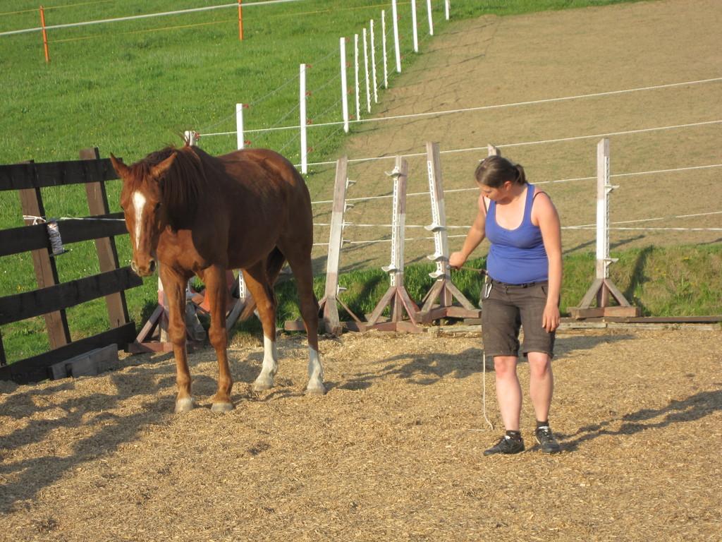 Natural Horsemanship Kurse