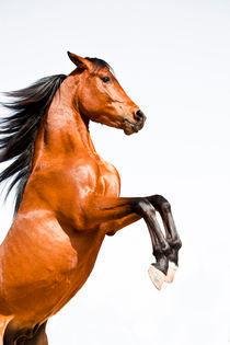 Persönlichkeitstraining mit Pferden