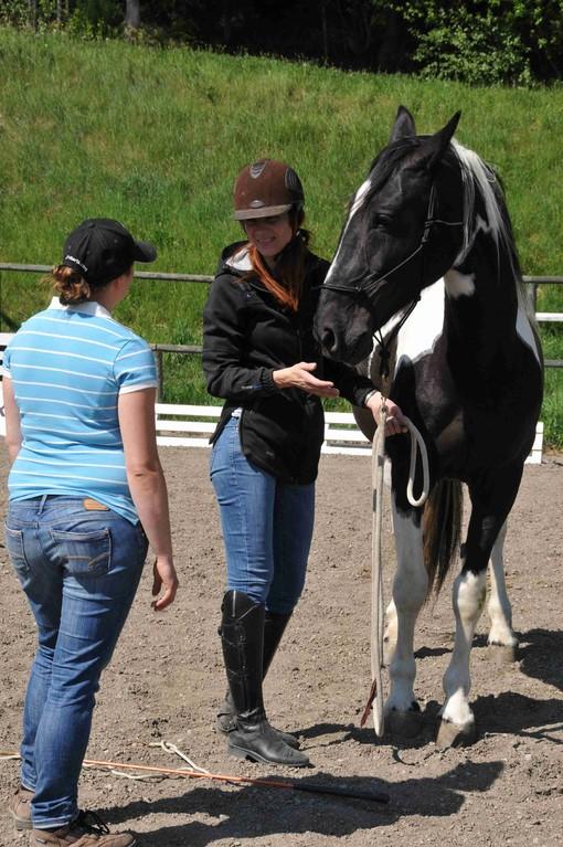 TrickyHorse Natural Horsemanship - Privattraining