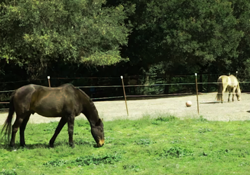 Your horse is turned out to one of our many small pastures 5 hours and day, 7 days a week, Weather permitting of course.