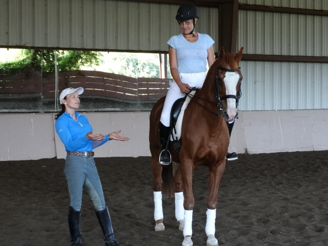 RDL has a wide range of equipment and horses for beginners and intermediate riders.