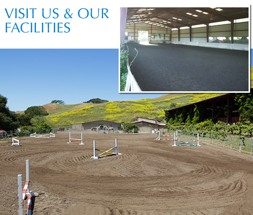 Indoor and outdoor arenas guarantee you can ride your horse rain or shine.