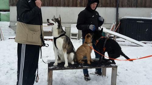 ...mit geübten Hunden und Hundeführer:-)