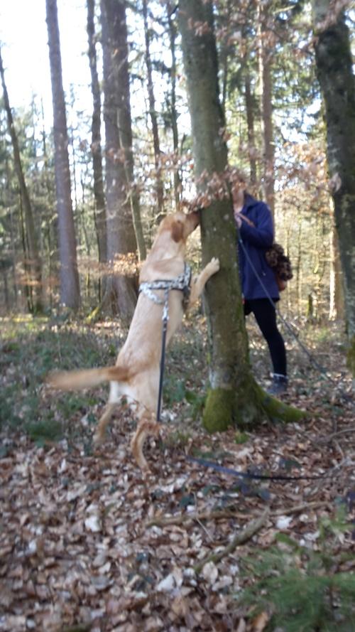 verschiedene Aufgaben wurden den Hunden gestellt...