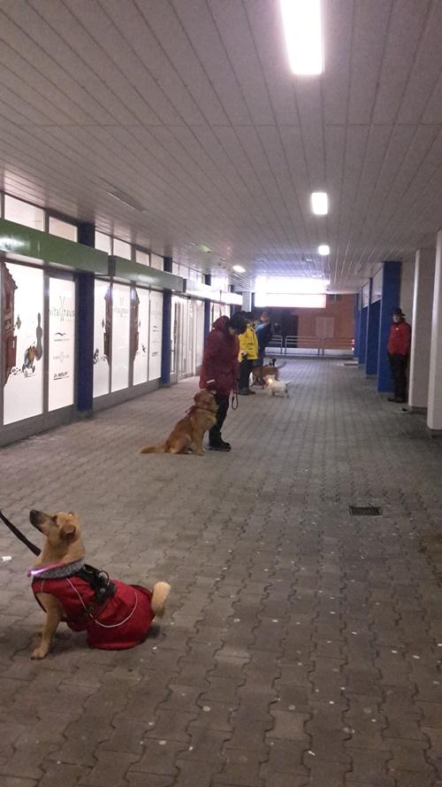 in einer für die Hunde eher ungewohnten Umgebung