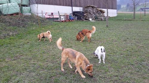 Futter schnüffeln unter Hunde-Kumpels