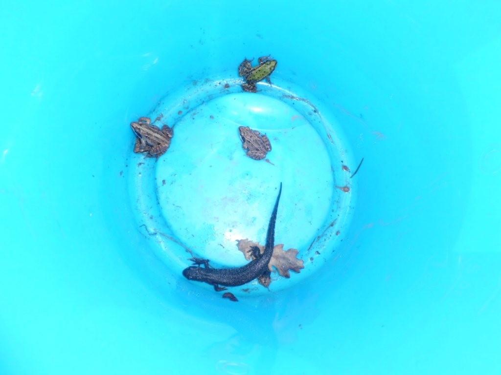 """Das """"Krötentaxi"""" der einen Gruppe füllt sich langsam"""