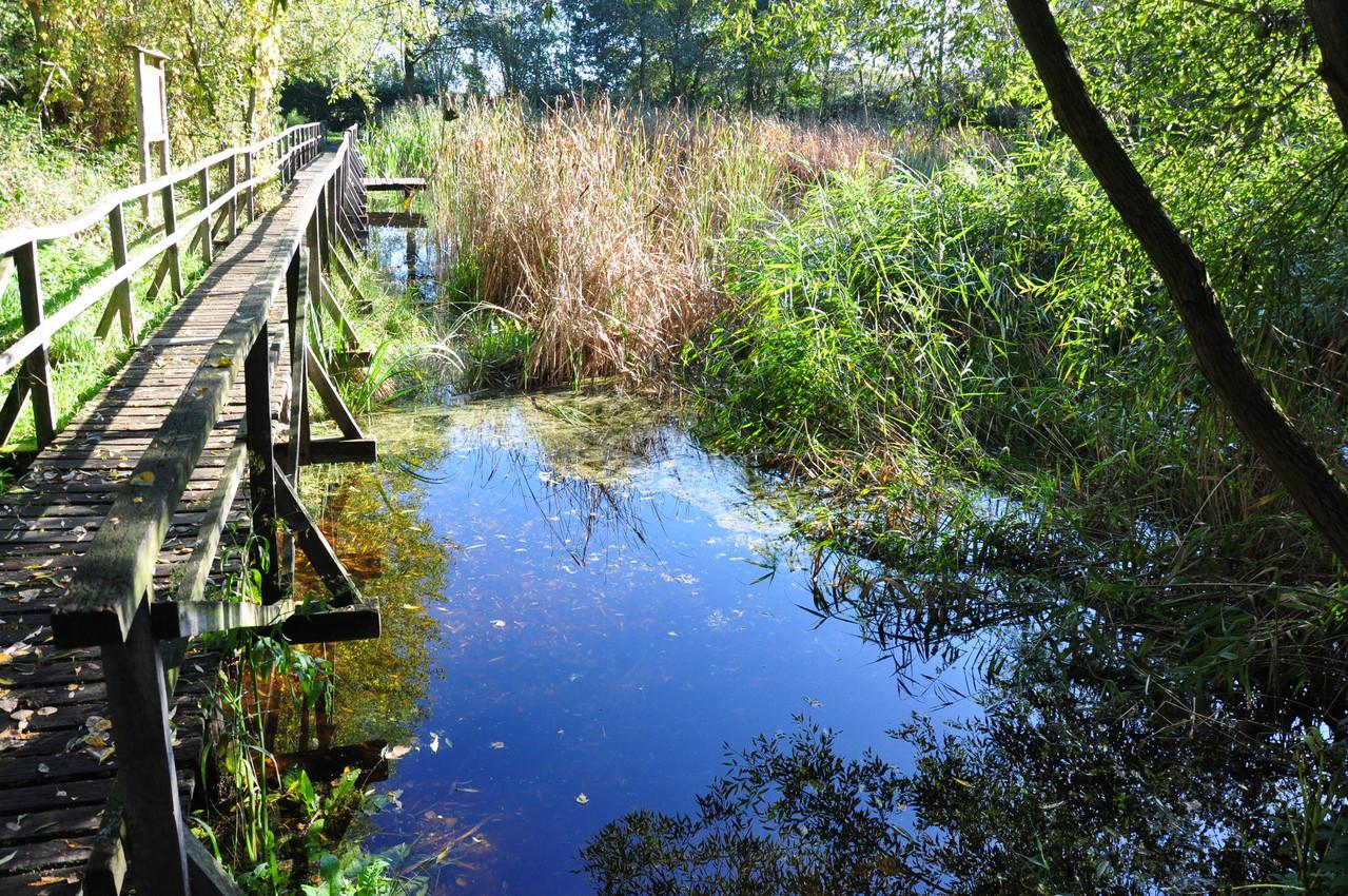 Das moorige Gelände weist auch ein kleines Gewässer auf, das für die Umweltbildung genutzt wird (Foto: Ulrich Meinhard)