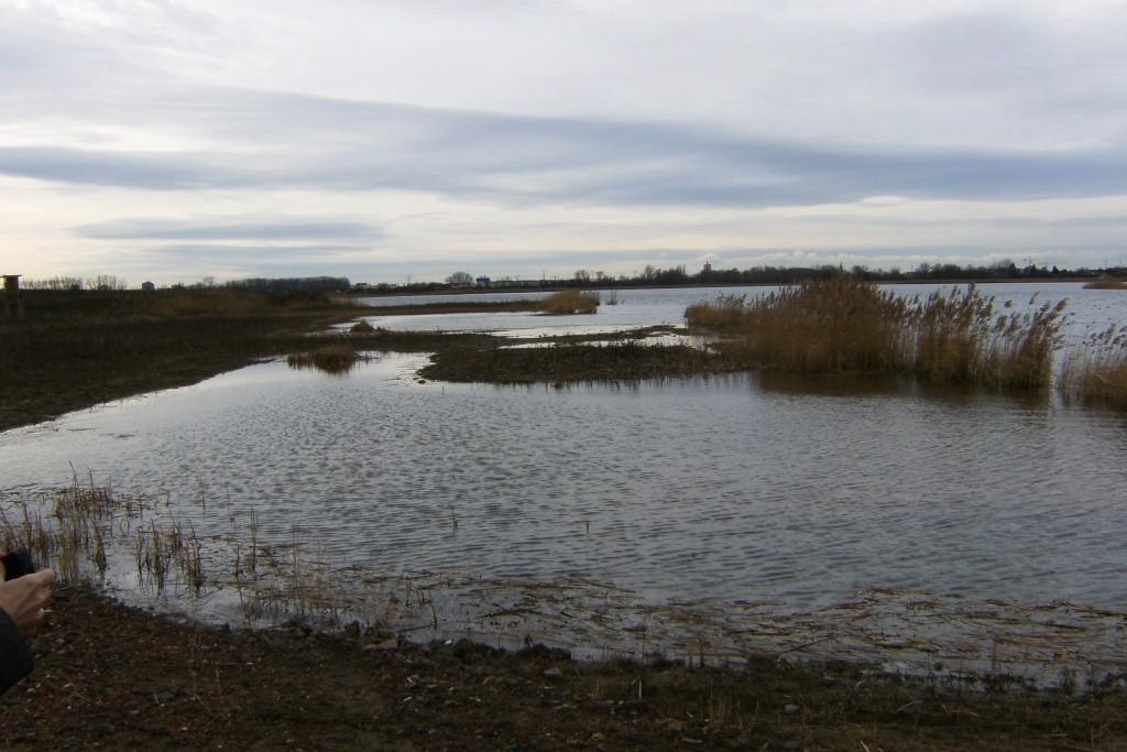 Speziell für den Kiebitz angelegte Wasserfläche