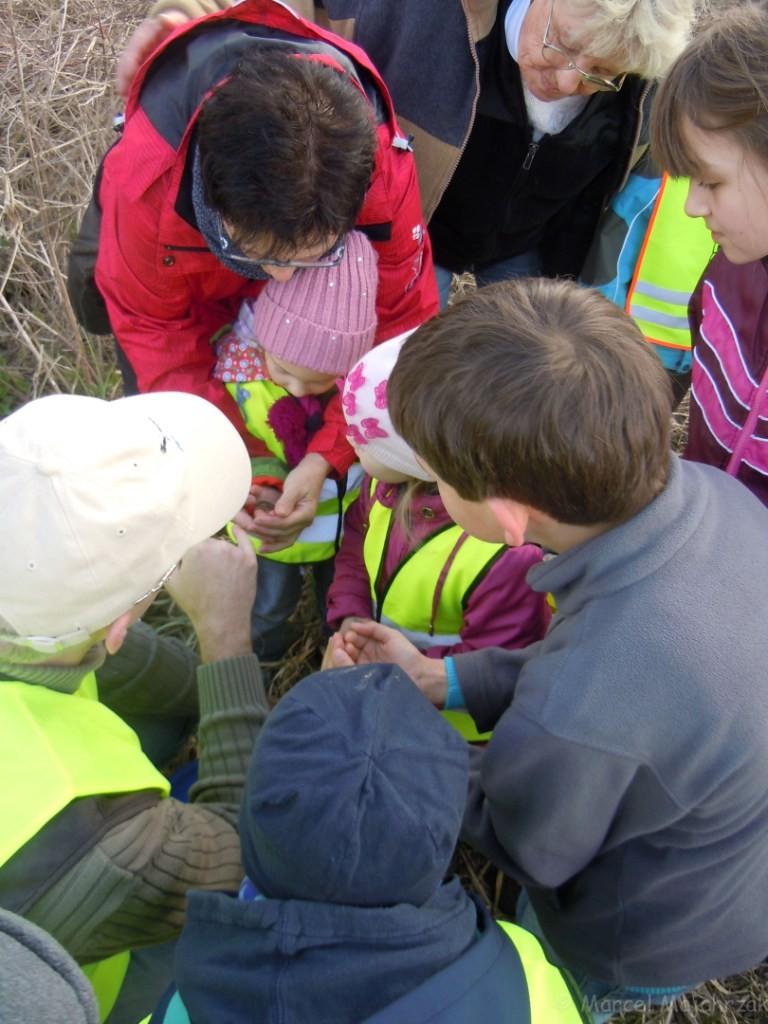 Hier werden die Amphibien nochmals intensiv betrachtet und untersucht bevor sie ins Wasser gesetzt werden
