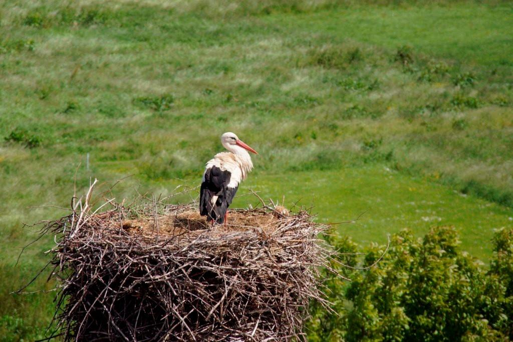 Zwei Tage später wurde ein Storch auf dem Nest beobachtet