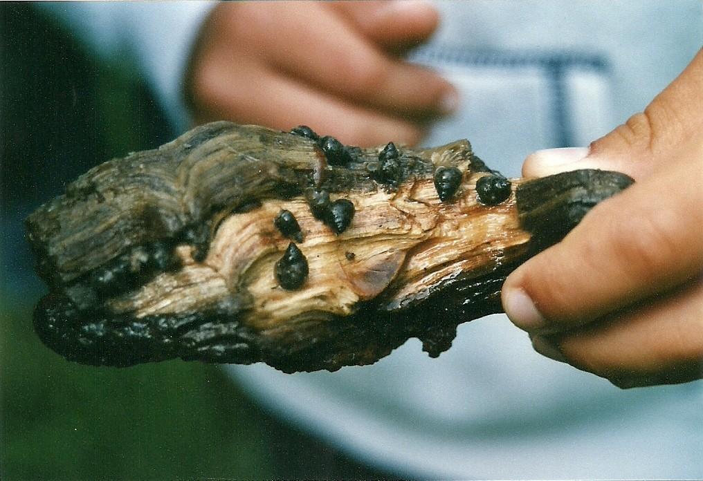 ...das Holz um - Schnecken!