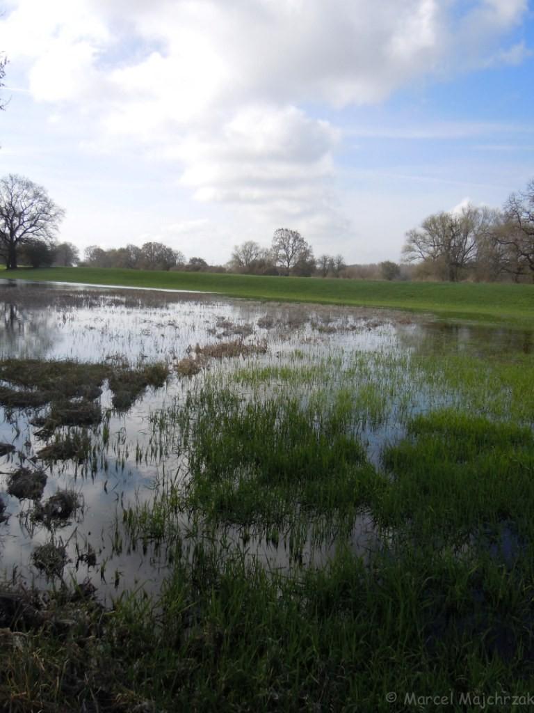 Überflutete Wiesen, wassergefüllte Senken und Altwässer