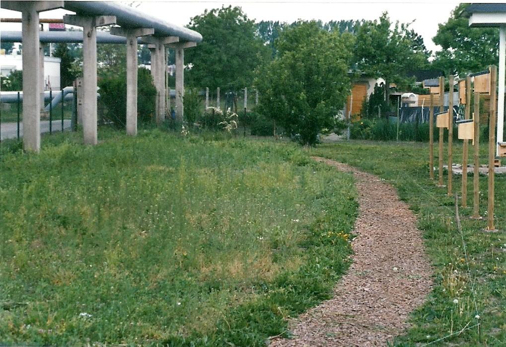 Der Weg im Garten