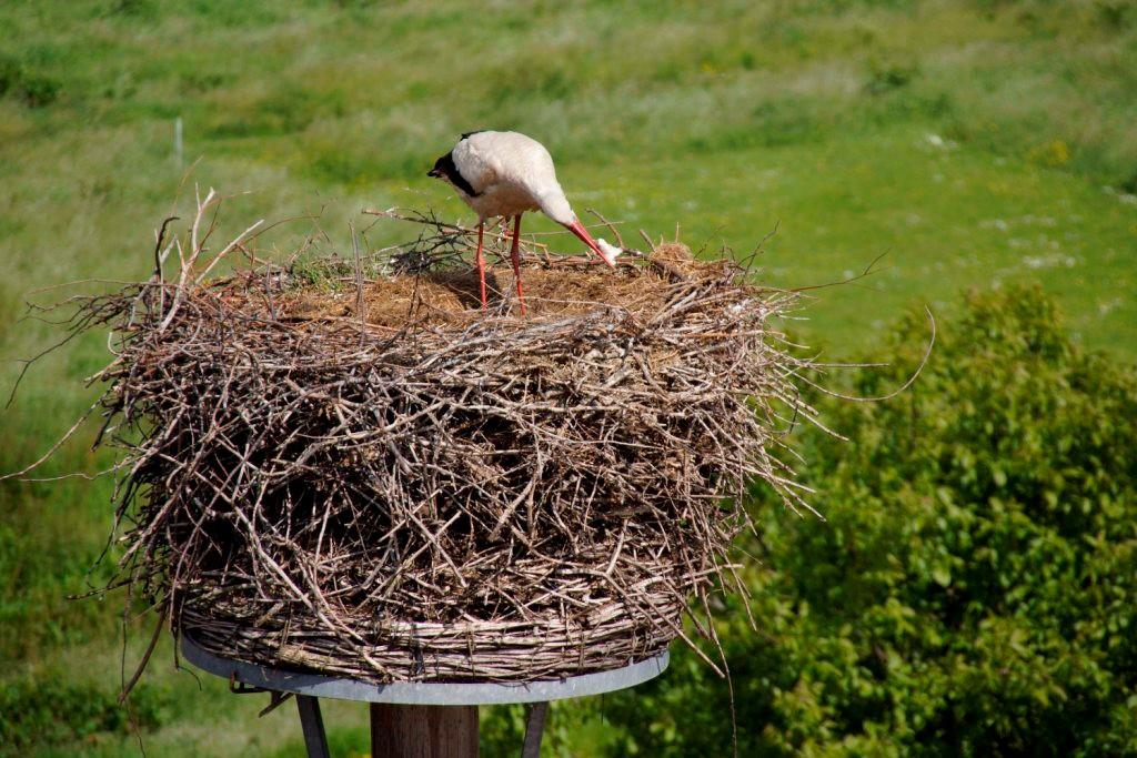 Vemutlich ein kleiner noch nicht geschlüpfter Jungvogel wird ebenfalls verzehrt