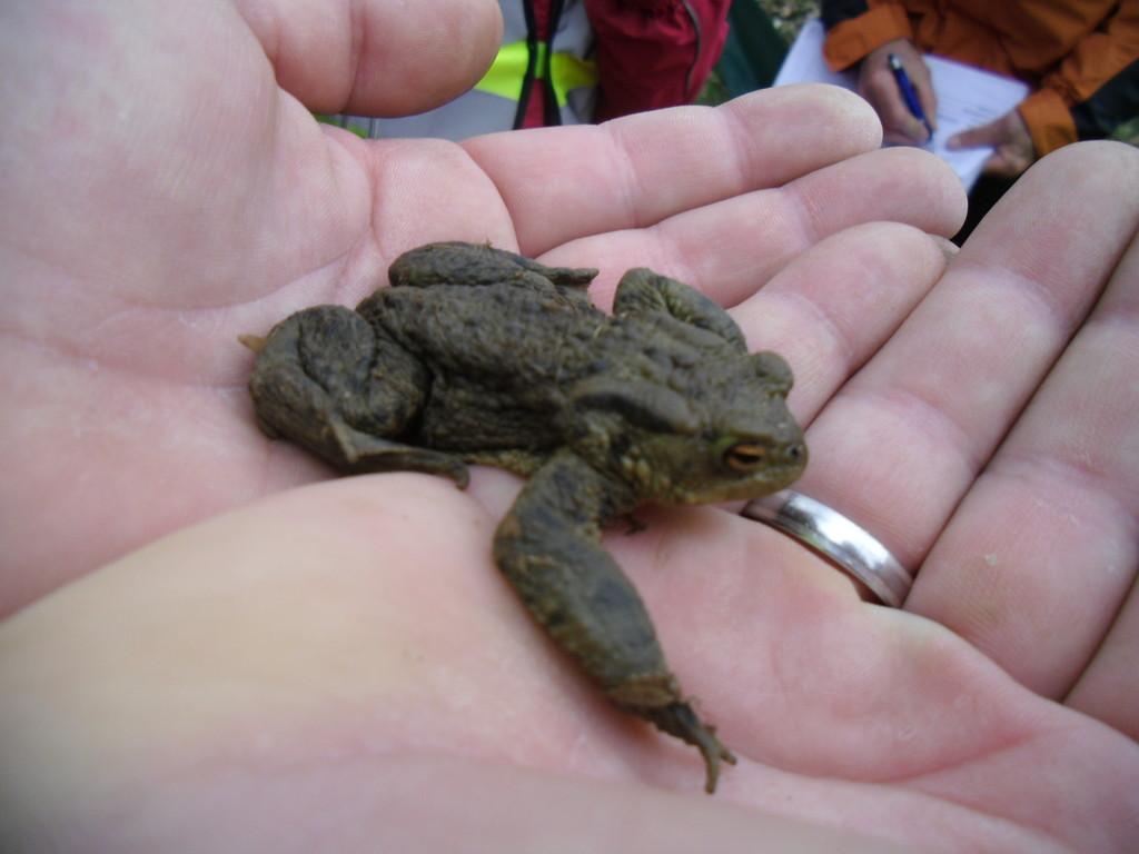 Die Freude war groß - auch eine Erdkröte wurde entdeckt