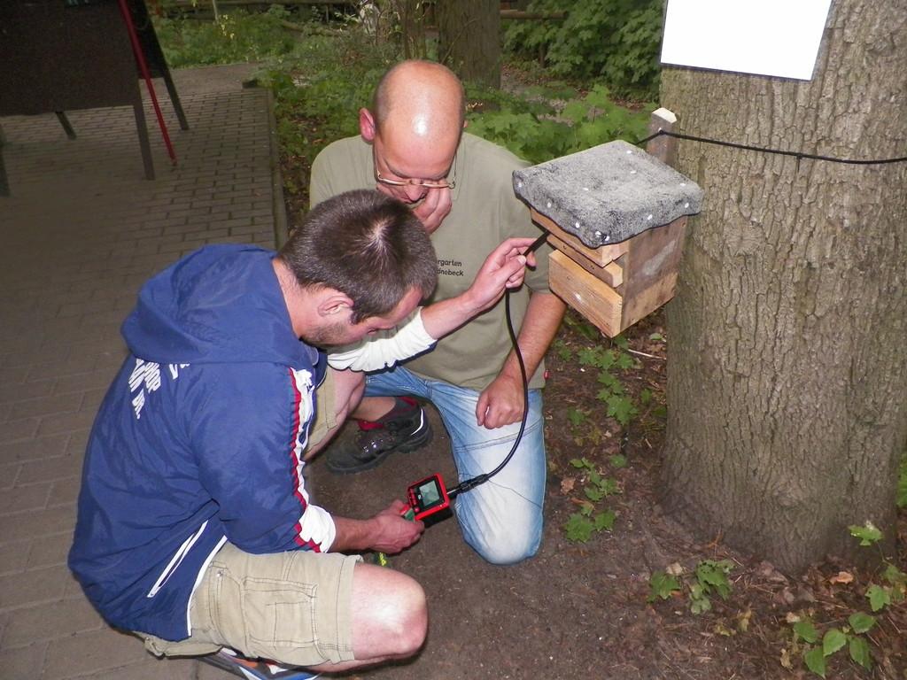 In einem Fledermauskasten konnte man mit einem Stetoskop eine Fledermaus suchen, so wie manche Fledermausforscher die Kästen kontrollieren