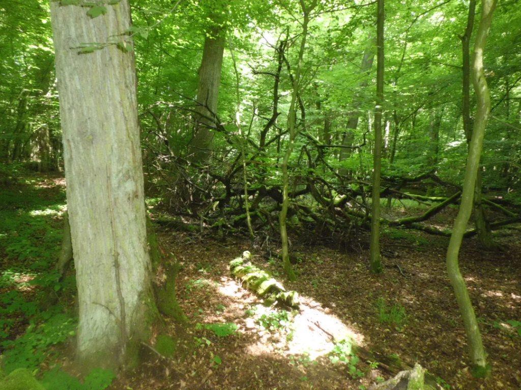 Urwüchsig anmutender alter Laubwald!