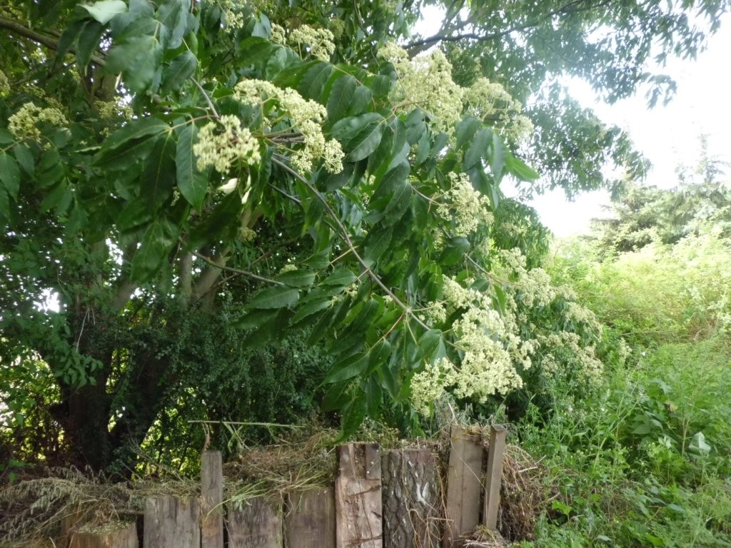 """Blühende Dufteschen säumen die """"Nachigallenoase"""""""