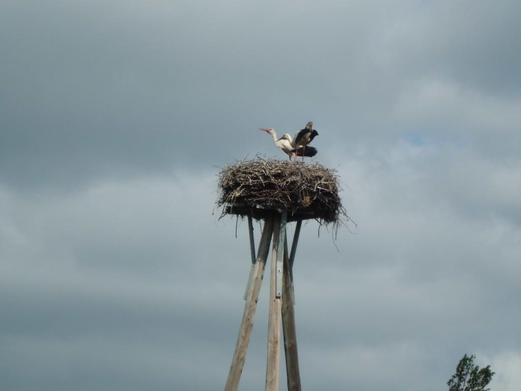 Ein Storchennest auf dem Gelände des Storchenhofes weckte das Interesse, denn...