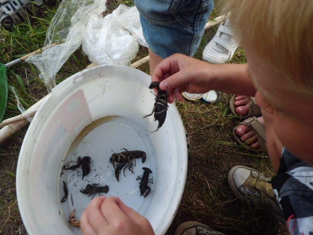 Sogar tote Amerikanische Flußkrebse (oder zumindest ihre Haut) waren dabei