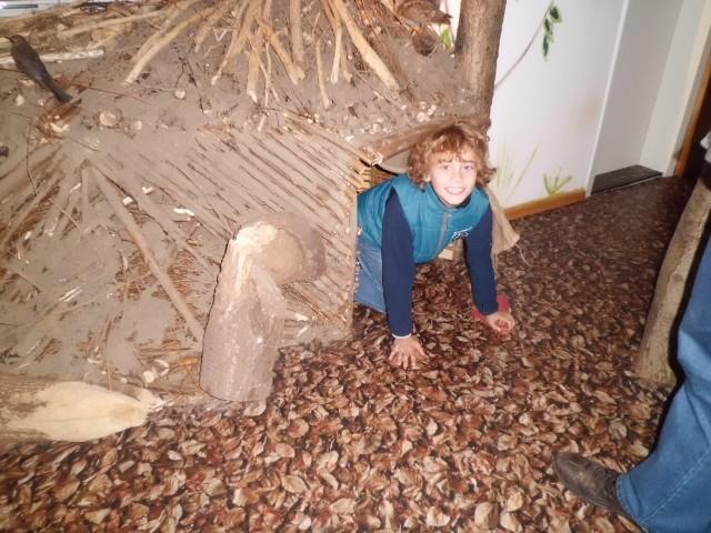 """Im Infohaus der Naturparkverwaltung gab es neben Diaramen, Ausstellungspräparaten und Informationen über den Drömling eine nachgebaute Biberburg, die von Kindern gern """"durchkrabbelt"""" wird (Foto: Gudrun Edner)"""