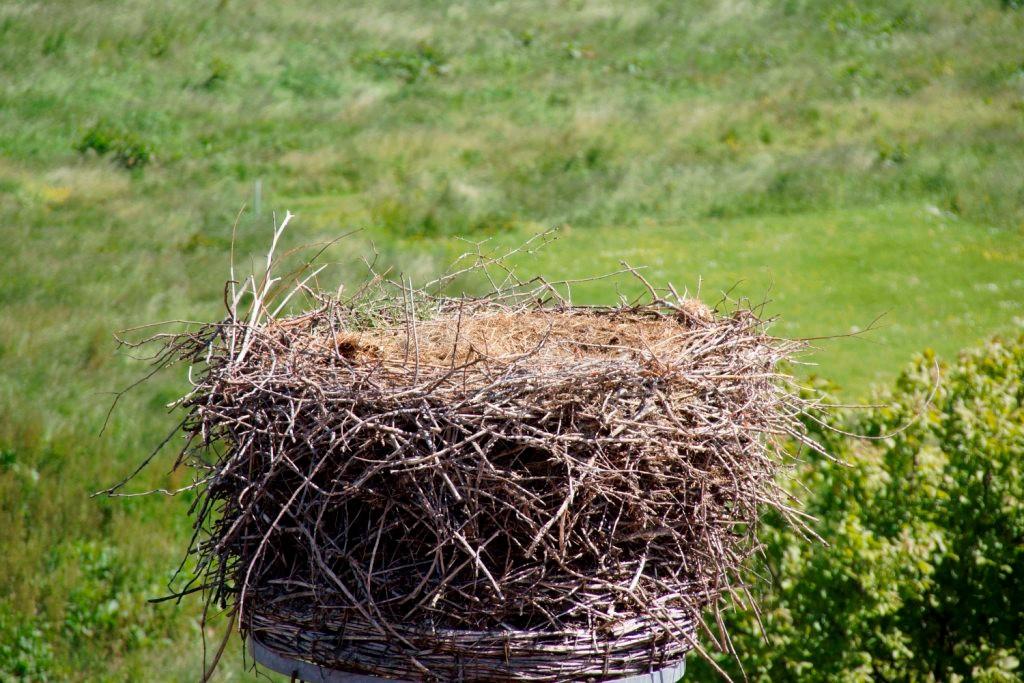 Das Nest ist nun leer!