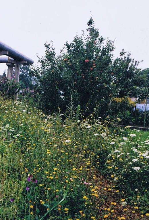 Die Wildblumenwiese im Sommer