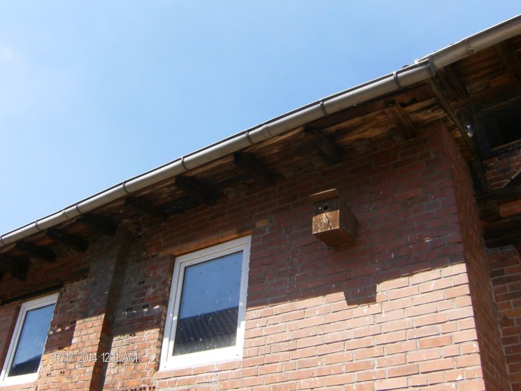 Mehlschwalbennester und Nistkasten am Wohnhaus der Familie Jäger