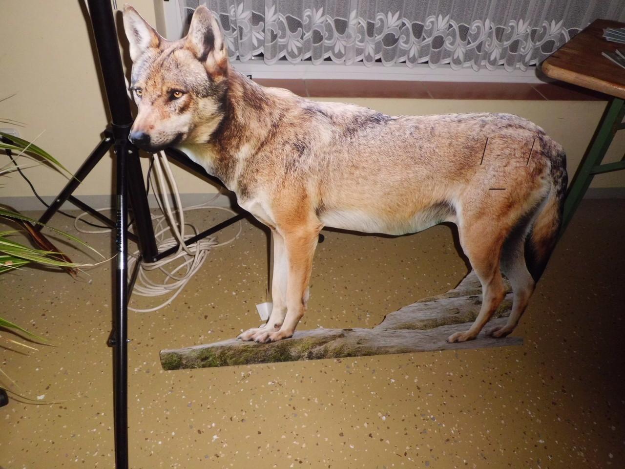 """Der NABU-""""Pappwolf"""" war ein Hingucker (Foto: Gudrun Edner)"""