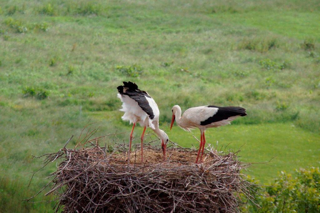 Das neue Paar am Nest