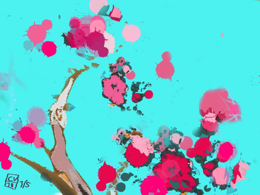 Cerisiers en fleurs–2018