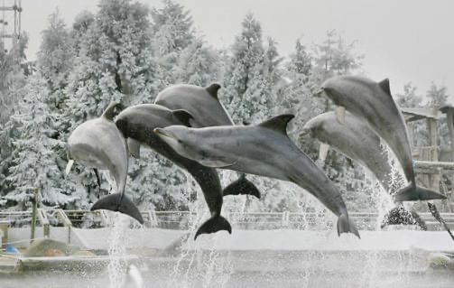Dolfinarium winteropening
