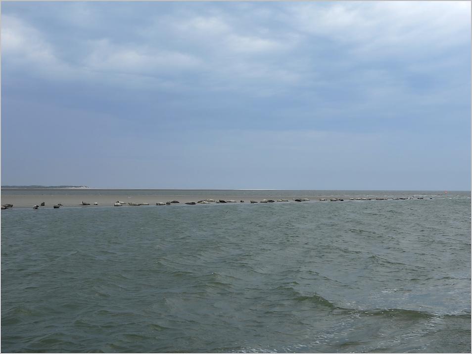 Seehunde in Sicht