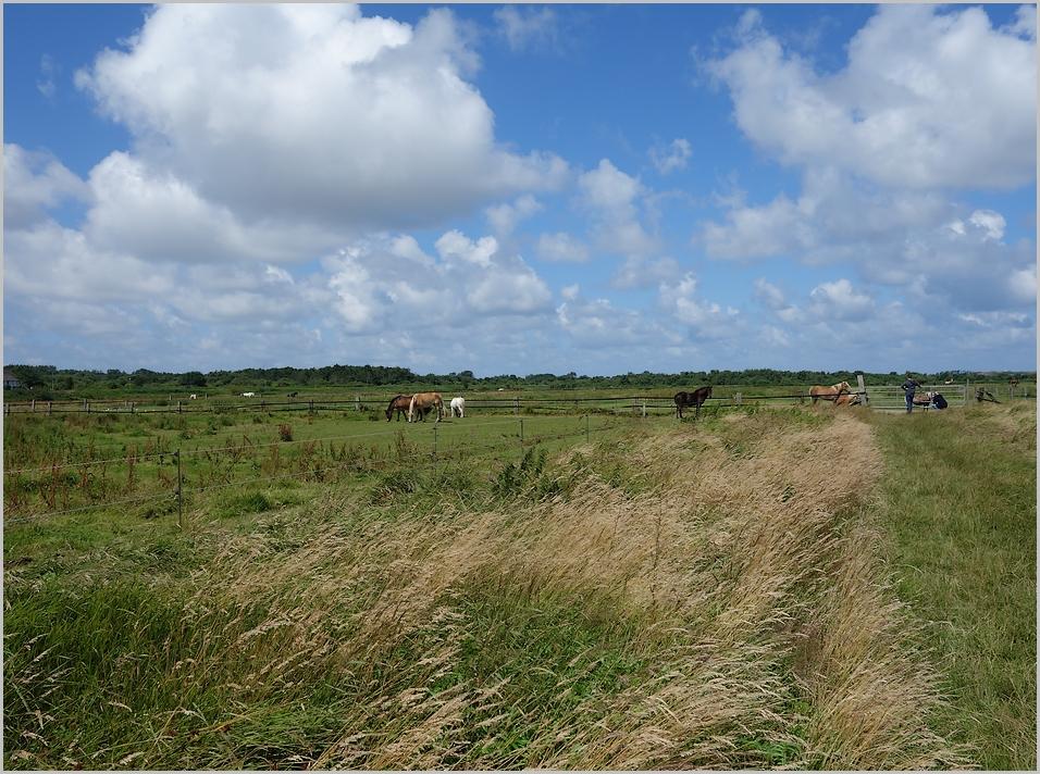 die grüne Insel Langeoog