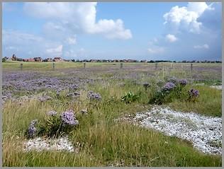 Die grüne Insel Baltrum
