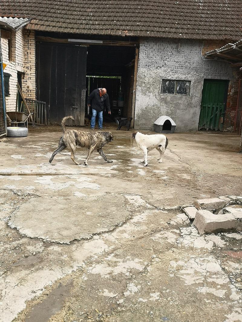 Durchgang durch die Scheune nach hinten zu den Hunden