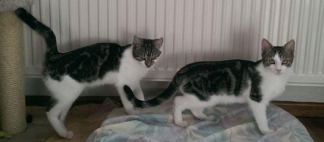 Milka und Twix
