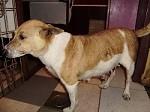 Jana durfte mit ihren Welpen zu den Tierfreunden von Moskito