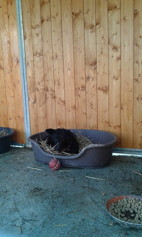 Patenhund Astor durfte mit seinen beiden Kumpels dort einziehen.