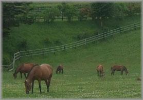浦河町の牧場で育てられる優駿たちの写真