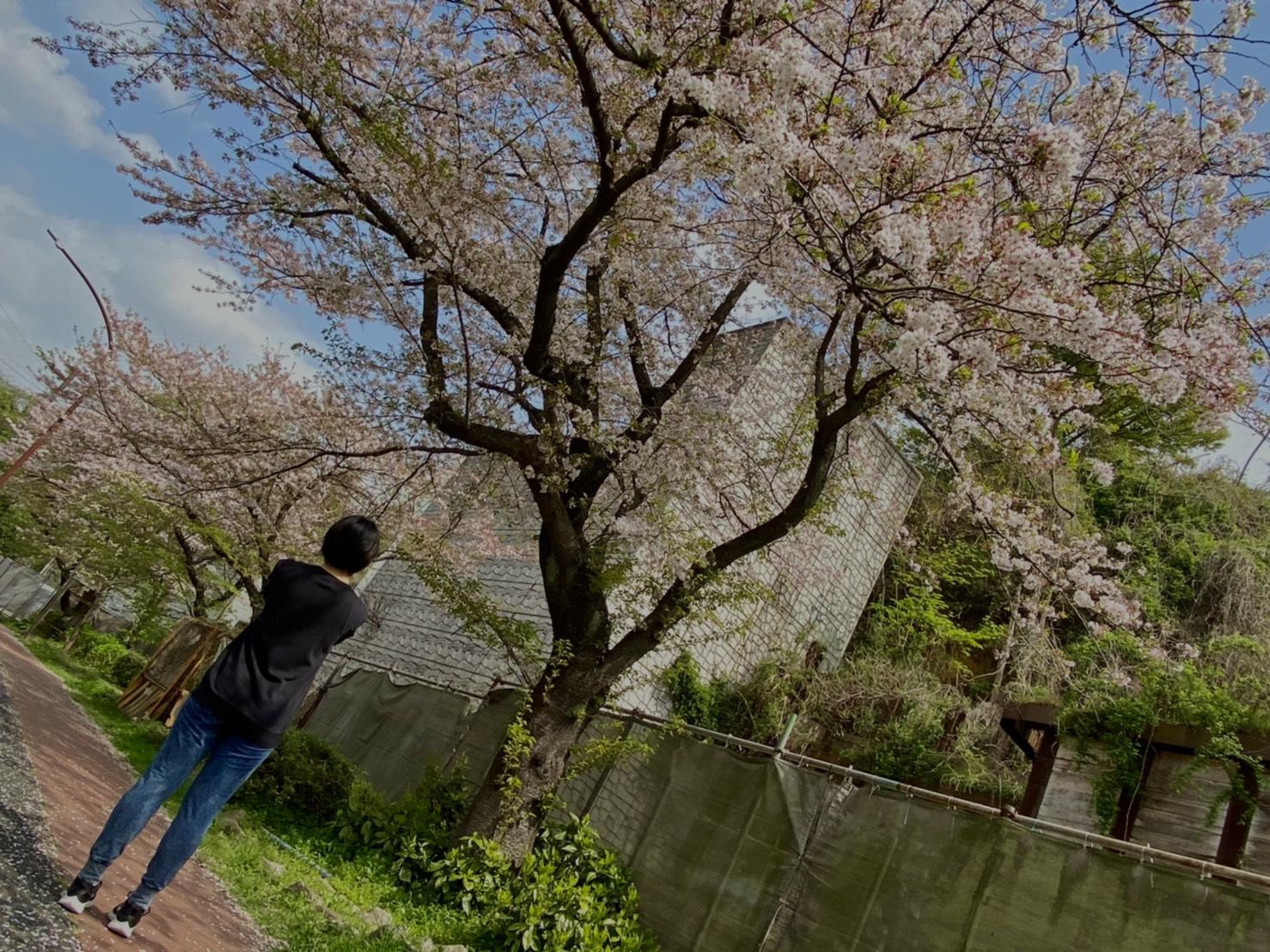 桜を見るとなんかの話。