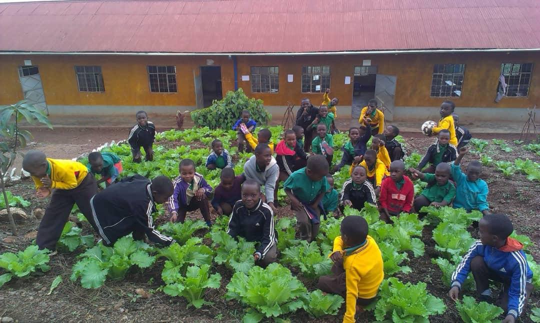 Eine Hosiana-Schülergruppe pflegt ihren prächtigen Salat im Beet.